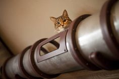 Steampunk Cat Transit System Shuttles Kitties across Mad Scientist's Secret Lab : TreeHugger