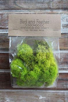 Chartreuse Reindeer Moss, Terrarium Filler | Terrarium Filler $4