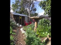 Clean chicken keeping and lots of other tips on self-reliance - youtube
