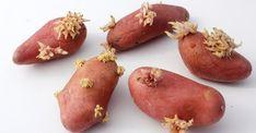 Empêchez vos patates de germer grâce à ce truc vraiment simple