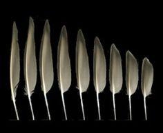 U.S. Fish & Wildlife Service Feather Atlas to help identify a found feather