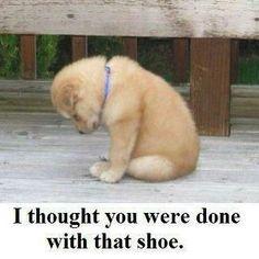 Pouting Puppy.