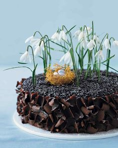 Easter Dessert Recipes | Martha Stewart Living - A richly textured dessert is a fertile nesting ground for a miniature roost spun from shredded phyllo dough and filled with candy-coated chocolate eggs. Chocolate Nests, Chocolate Curls, Melting Chocolate, Chocolate Cake, Chocolate Frosting, White Chocolate, Cake Recipes, Dessert Recipes, Phyllo Recipes