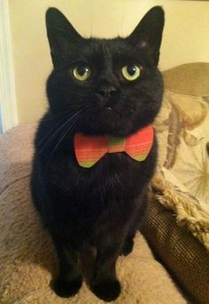 I love a cat in a bow tie. Especially one that looks like my babies =)