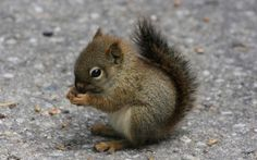 Google Image Result for http://cdn.arkarthick.com/wp-content/uploads/2010/04/blissfully-cute-baby-animals-baby-squirrel-6.jpg