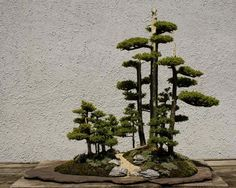 ♦֍What do you think about this cute #bonsai tree?♣♥       #BonsaiInspiration