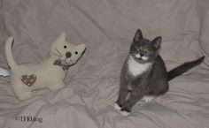 ~Tails from the Foster Kittens~: Mr. Mustache's Monday Morning