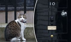 Larry the cat stood stoically in front of the famous number 10 in Downing street