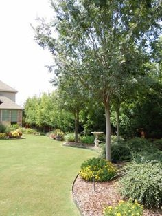 sketching my garden gardens designs and backyards - Garden Ideas Along Fence Line