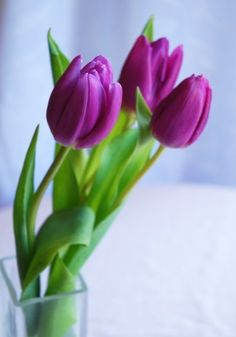 tulips....because.....
