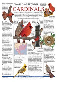 Paper german birds strip agree, your idea