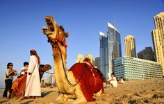 Camel ride in Dubai Dubai Beach, Burj Al Arab, Most Luxurious Hotels, In 2015, Amazing Buildings, United Arab Emirates, Countries Of The World, Abu Dhabi, Around The Worlds