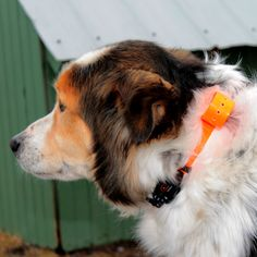 Some advice for choosing an anti-bark collar for your dog.