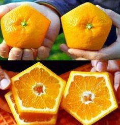 Fantastic oranges. They sale it in Japan. Can You believe it?