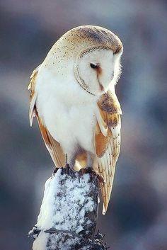Зима♥_♥
