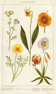 ilustraciones-botanicas-naturaleza-arte-y-ciencia-01