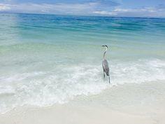 Lido Beach, Bird, Animals, Animales, Animaux, Birds, Animal, Animais