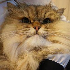 _ 고양이라는 털쟁이를 알게되서 너무 햄볶해 어제보다 오늘 오늘보다 내일 내일보다 1년뒤 2년뒤... Follow us on Instagram :D #cats #cat #catlover #lovecats #funny #fun #cute #socute #feline #felines #felinefriend #fur #furry #paw #paws #kitten #kitty #kittens #kittycat #kittylove #fluffy #fluff