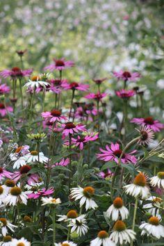 Inredningsbloggen : Piazzan Garden-trädgård rubecka Foto : Pernilla.N