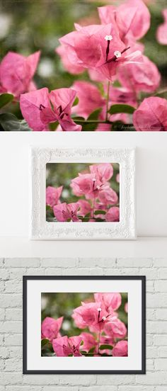 Framing possibilities for home decor. For more ideas go to https://www.etsy.com/listing/200955447/bougainvillea-flower-photo-5x7.