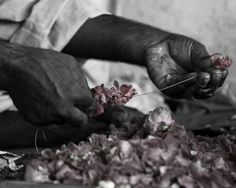 Photograph Black and White Pakistani Man Hands Stringing Together Light Dusty Pink Rose Flower Petals Cultural Travel Art Print Home Decor by HenaTayebPhotography
