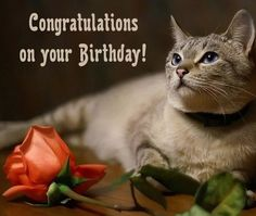 Free Pictures Of Cat Birthday Cards