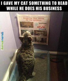 Cat memes Cat reads newspaper...