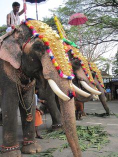 Ceremonial elephants, Cochin