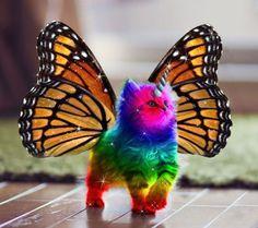 Magical rainbow sparkly butterfly unicorn cat.