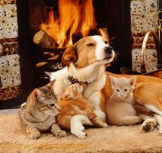 Dog and cats by the fire