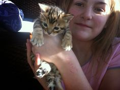 Born December 14.  Available female kitten from redrockbengals.com. Bengal Kittens For Sale, Kitten For Sale, December, Female, Cats, Animals, Gatos, Animales, Kitty Cats