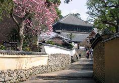 木蓮咲く二月堂への裏参道