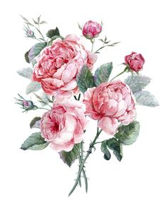 Illustration about Classical vintage floral greeting card, watercolor bouquet of English roses, beautiful watercolor illustration. Illustration of rose, background, garden - 57273551 Vintage Flowers, Vintage Floral, English Rose Tattoos, Rose Flower Tattoos, English Roses, Gravure, Watercolor Illustration, Watercolor Flowers, Watercolor Tattoo