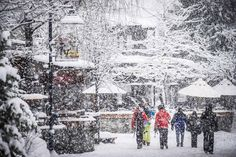 From deep Coast Range snow to a vibrant village scene, Whistler deservedly wears the crown as the most famous and popular ski destination in Canada. Alpine Skiing, Snow Skiing, Sea To Sky Highway, Adventure Center, Ski Vacation, Snowy Day, Winter Photos, Whistler, Winter Travel