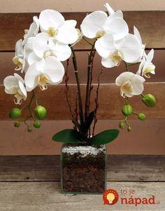 Ryžu varím skoro každý deň, ale toto by mi nenapadlo ani vo sne: Nikdy nevylievajte túto vodu - dokáže úžasné veci a to celkom zdarma! Orchid Flower Arrangements, Orchid Planters, Orchid Centerpieces, Orchid Pot, Ikebana, Artificial Orchids, Dendrobium Orchids, Indoor Flowers, Diy Flowers