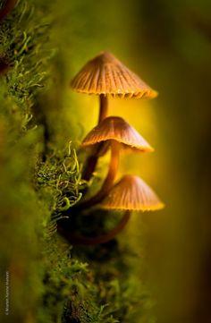 just 3 Sponge by KanneHansen Mushroom Art, Mushroom Fungi, Wild Mushrooms, Stuffed Mushrooms, Mushroom Pictures, Fantasy Forest, Woodland Creatures, Fantasy Landscape, Wildlife Art