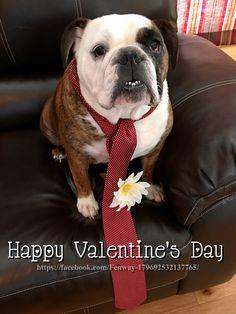 14Feb16 Fenway - Bulldogs - Valentine's Day