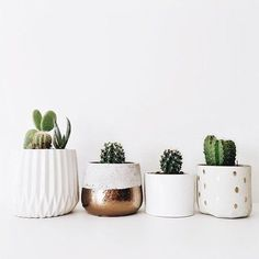 Cactus plants can be a beautiful interior to create your home more liked, a very adorable idea. It's not a good idea to put some of your indoor plants for a few factors. Big Plants, Indoor Plants, Cactus Plants, Small Cactus, Cactus Pot, Fake Cactus, Indoor Herbs, Indoor Gardening, Retro Home Decor