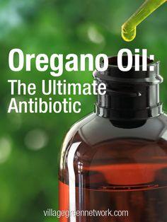 Oregano Oil: The Ultimate Antibiotic / http://villagegreennetwork.com/oregano-oil-ultimate-antibiotic/
