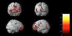 Resultado de imagem para misterio do cerebro