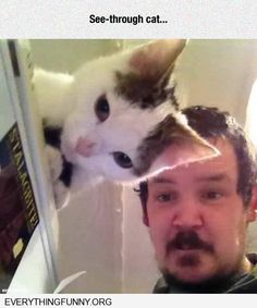 this is too cool - cats ear matches man's face perfectly - http://everythingfunny.org