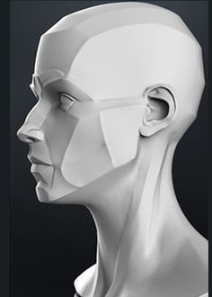 zbrush wall Wall You can find Zbrush and more on our website Head Anatomy, Human Anatomy Drawing, Body Anatomy, Anatomy Art, Zbrush Anatomy, Anatomy Sculpture, Sculpture Art, Planes Of The Face, Face Structure