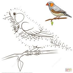 Zebra Finch Bird dot to dot from Birds category. Select from 31983 printable crafts of cartoons, nature, animals, Bible and many more. Nativity Coloring Pages, Owl Coloring Pages, Free Printable Coloring Pages, Coloring Books, Dot To Dot Printables, Printable Crafts, Free Printables, Dots Game, Zebra Finch