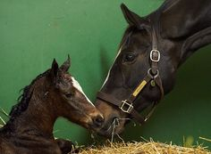 Zenyatta delivers War Front filly