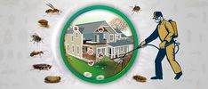 We are providing the best Pest control services for commercial and residential with pest management services, best outdoor pest control. Bed Bug Control, Best Pest Control, Pest Control Services, Types Of Bugs, Types Of Insects, Ant Problem, Pest Management, Management Company, Garden Guide