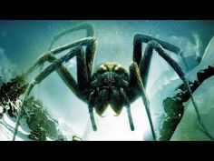 """Ice Spiders (Wallpaper) Wallpaper from Giant Monster Movies. Wallpaper for """"Ice Spiders"""". """"Ice Spiders"""" is a 2007 horror/Sci-fi movie that premiered on June 2007 on the Sci Fi Channel, with giant spiders. It is directed by Tibor Takács. Sci Fi Movies, Action Movies, New Movies 2018, Giant Monster Movies, African Mythology, Giant Spider, Full Hd Wallpaper, Movie Wallpapers, Wallpaper Pc"""