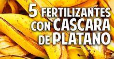 5 fertilizantes con cáscara de plátano