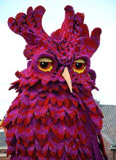 Bloemencorso Zundert: Magenta owl