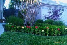 My how your garden grows