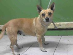 www.PetHarbor.com pet:LACO1.A4957057